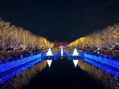 国営昭和記念公園イルミネーション(Winter Vista Illumination)