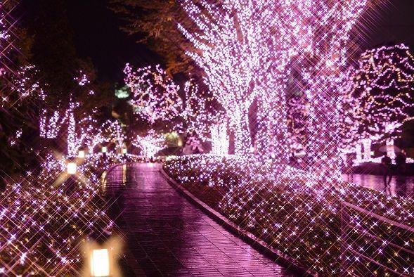 新宿南エリアが光でつながるイルミネーション