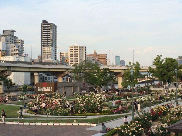 中之島公園のバラとリバーサイドに流れる空気で、秋気分を満喫