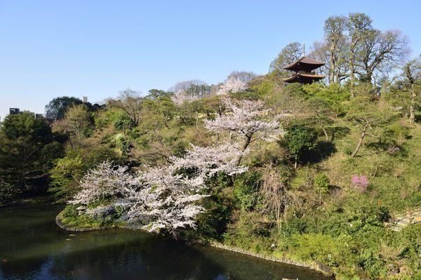 ホテル椿山荘東京からの桜