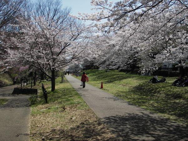 立川公園、根川緑道