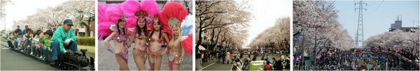 六高台さくら通り/(むつみ)桜まつり